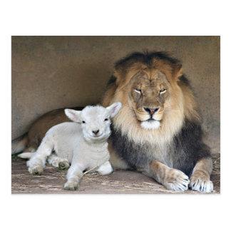 Lion et agneau carte postale