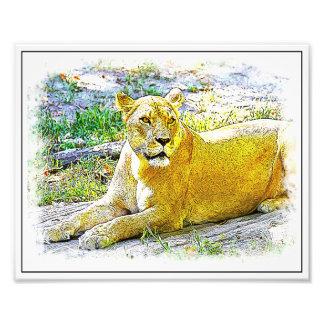Lion femelle impression photo