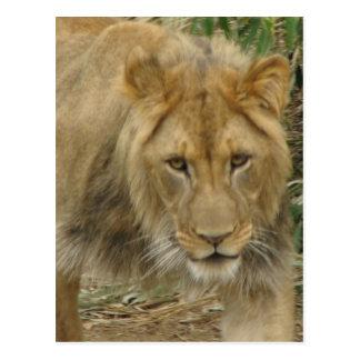 Lion la carte postale de lion