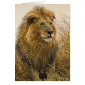 Lion maned de noir de vieil adulte, jeu de Mara de Carte De Vœux