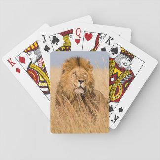 Lion masculin caché dans l'herbe jeu de cartes