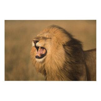 Lion masculin hurlant impression sur bois