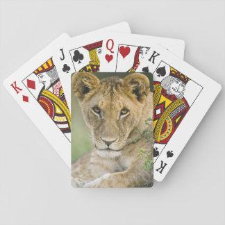 Lion, Panthera Lion, masai Mara, Kenya Jeux De Cartes