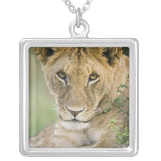 Lion, Panthera Lion, masai Mara, Kenya Pendentif Carré