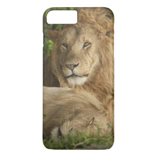 Lion, Panthera Lion, repos de mâles Coque iPhone 7 Plus