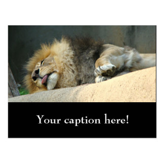 Lion somnolent collant la langue carte postale