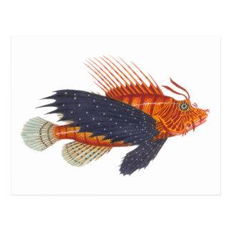 Lionfish - Pterois - gravure d'antiquité de Carte Postale