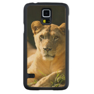 Lions Coque Slim Galaxy S5 En Érable