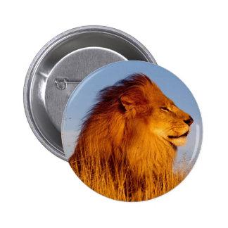 Lions dans le tee - shirt, les cartes et les cadea badge