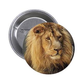Lions dans les cadeaux et le tee - shirt sauvages badge rond 5 cm
