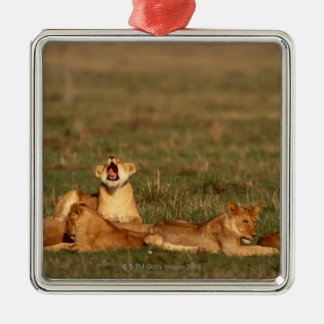 Lions sur une savane ornement carré argenté