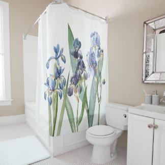 L'iris bleu botanique fleurit le rideau en douche