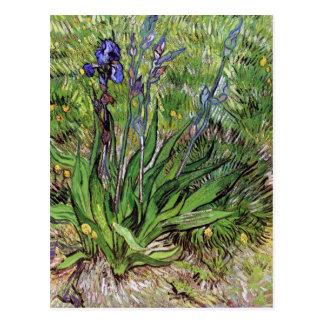 L'iris par Vincent van Gogh Carte Postale