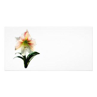Lis blanc avec les rayures rouges cartes de vœux avec photo