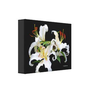 Lis orientaux blancs élégants de Casablanca Toile