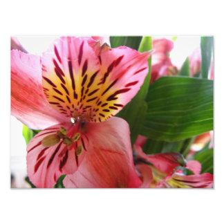 Lis tigré rose impression photo