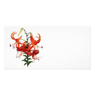 Lis tigrés cartes de vœux avec photo