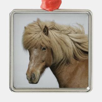 L'Islande. Portrait d'un cheval islandais Ornement Carré Argenté