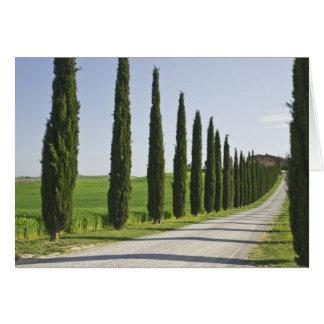 L'Italie, Toscane. Ligne d'arbres de Cypress allée Carte De Vœux
