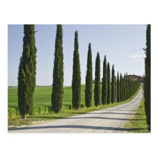 L'Italie, Toscane. Ligne d'arbres de Cypress allée Carte Postale