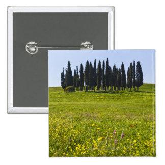 L'Italie, Toscane, Val D'Orcia, arbres sur le pré Badge