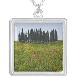 L'Italie, Toscane, Val D'Orcia, paysage Collier
