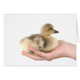 little goose in one hand carte de vœux
