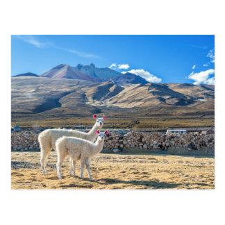 Llamitas dans Saler d'Uyuni, la Bolivie Carte Postale