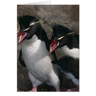 L'Océan Atlantique, Îles Falkland. Rockhopper Carte De Vœux