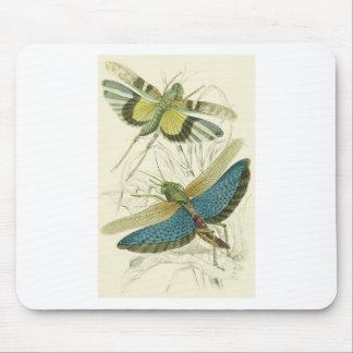 Locusta Cristata (inférieur), flava de Locusta (su Tapis De Souris