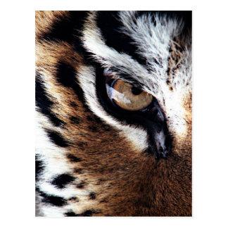 L'oeil du tigre carte postale