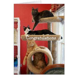 Logement de Kitty Carte De Vœux