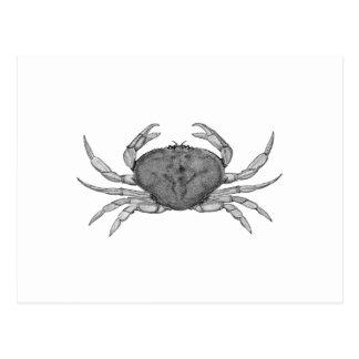 Logo de crabe de Dungeness (schéma) Carte Postale