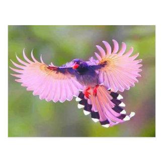 l'oiseau carte postale