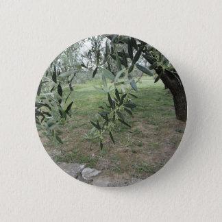 L'olivier s'embranche avec les premiers bourgeons badges