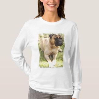 Long T-shirt de douille de dames anglaises de