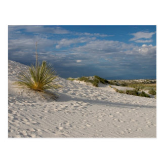 Longue ombre du yucca - carte postale