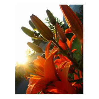L'ONU orange a fleuri Cartes Postales