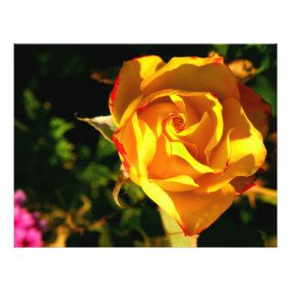 L'orange s'est levée prospectus 21,6 cm x 24,94 cm