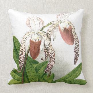 L'orchidée botanique de Cypripedium fleurit le Coussin