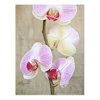 L'orchidée fleurit la carte postale