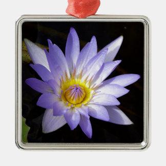 lotus bleu du Nil Ornement Carré Argenté