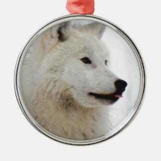 Loup arctique collant sa langue ornement rond argenté