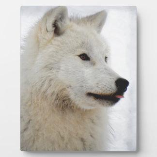 Loup arctique collant sa langue plaque photo