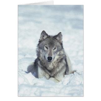 Loup Carte De Vœux