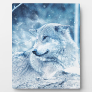 Loup dans la neige plaque photo