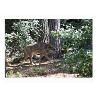 Loup de bois de construction carte postale