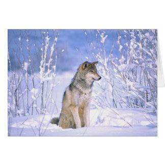 Loup de bois de construction se reposant dans la carte de vœux