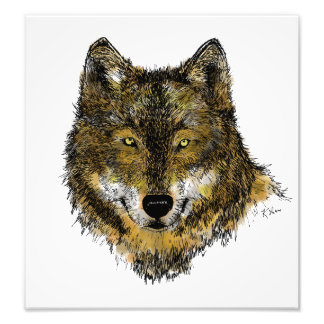 Loup en couleurs - copie de photo