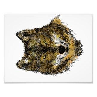 Loup en couleurs - copie de photo